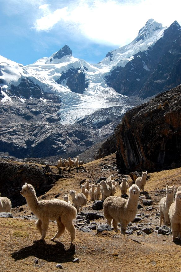 Peru Tessted (3)